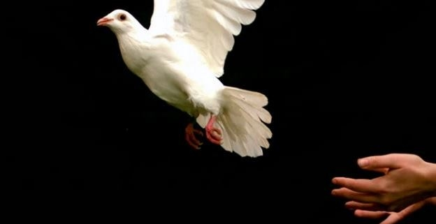 Picture of hand releasing dove in flight